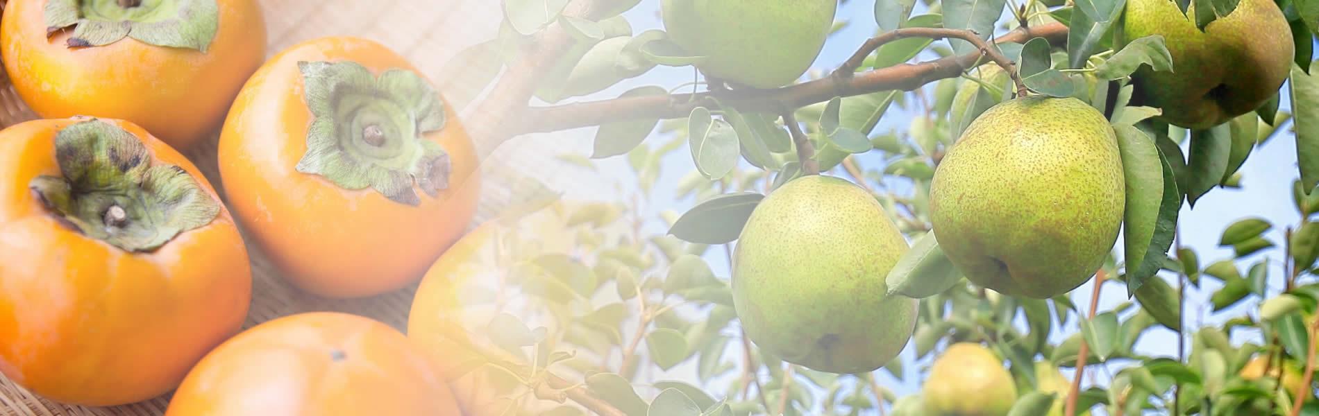 日本一美味しい桃・ぶどうを全国へお届けいたします